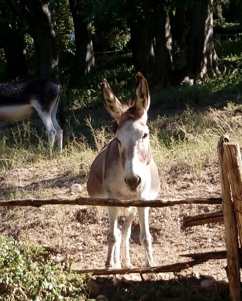 asino-S.Domenico-Parco-Sigurtà