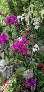 Giardino-Botanico-Varone