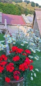 Contrada-Pagani-fiori
