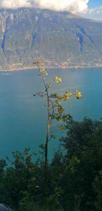 Panorama-Lago-Garda